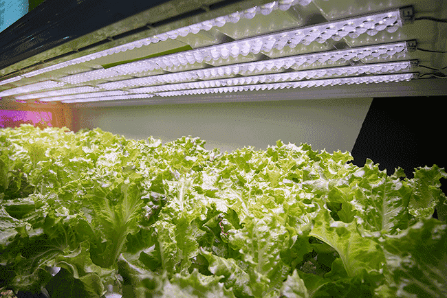 LED Plant Growth Lighting